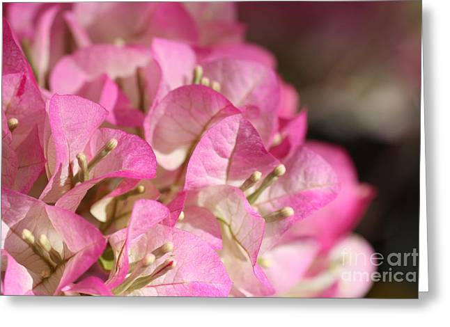 Papery In Pink Greeting Card