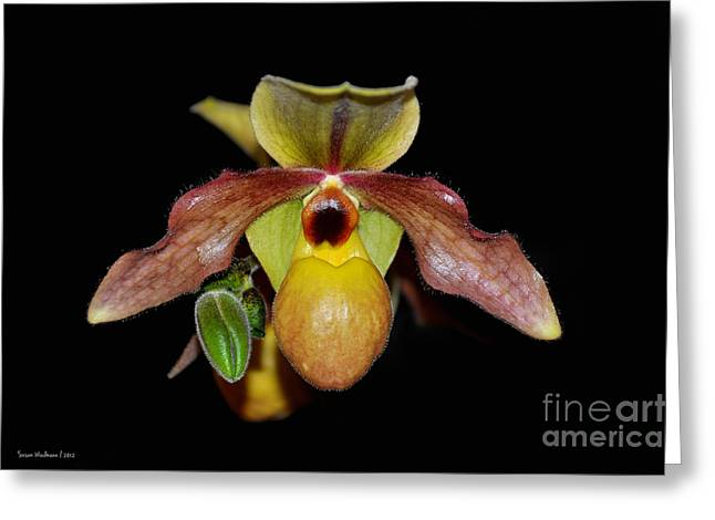 Paphiopedilum 'summer Ice' Orchid Greeting Card