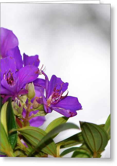 Paradise Found - Floral Photography By Sharon Cummings Greeting Card