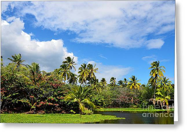 Paradise Lagoon Greeting Card by David Lawson