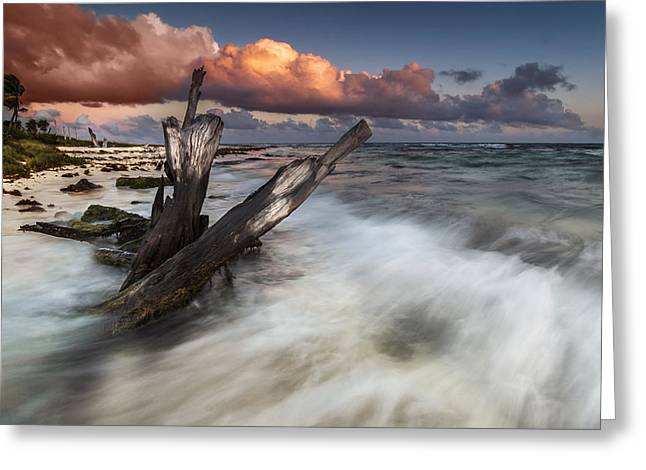 Greeting Card featuring the photograph Paradise Lost by Mihai Andritoiu