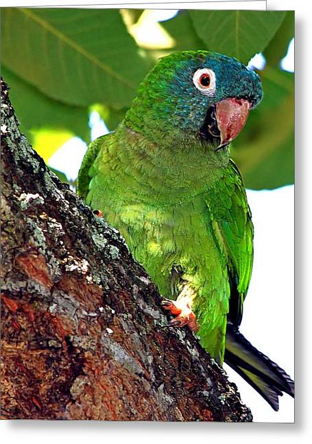 Parakeet In A Tree Greeting Card