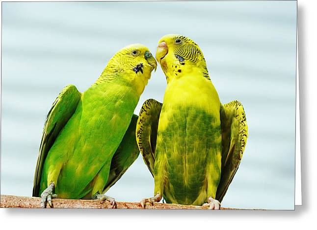 Parakeet Love Greeting Card