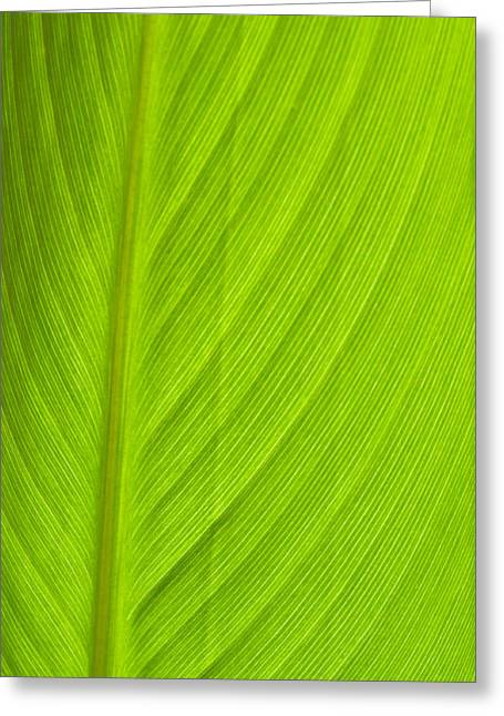 Parallel Leaf Venation Greeting Card
