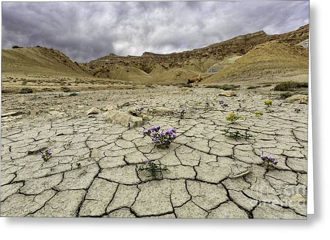 Parched Ground Greeting Card