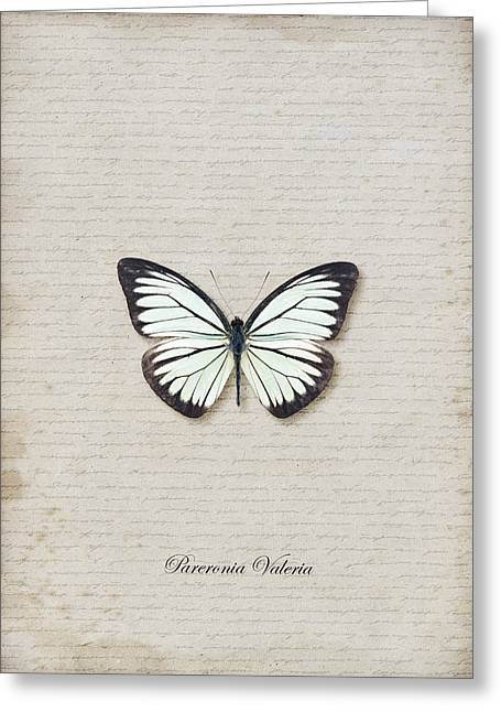 Pareronia Valeria Butterfly Greeting Card