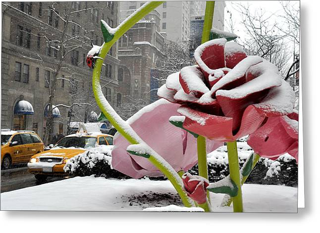 Park Avenue Rose In The Snow Greeting Card by Diane Lent