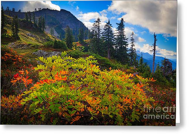 Park Butte Fall Color Greeting Card by Inge Johnsson