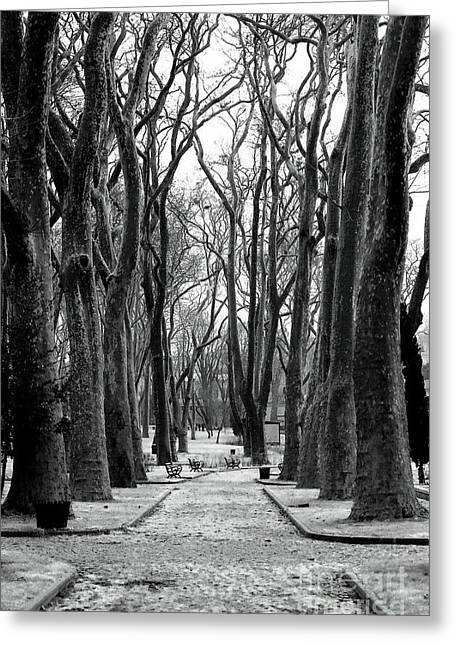 Park Path Greeting Card by John Rizzuto