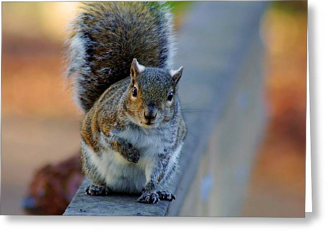 Greeting Card featuring the photograph Park Squirrel I by Daniel Woodrum
