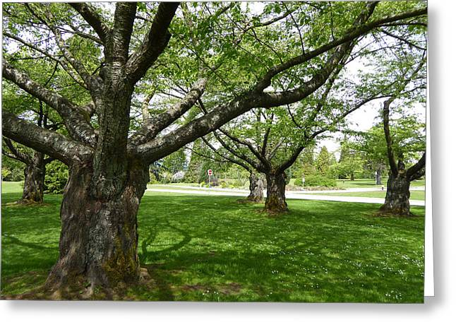 Greeting Card featuring the photograph Park Trees by Laurie Tsemak