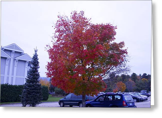 Parked Under Red Tree Greeting Card by Dick Willis