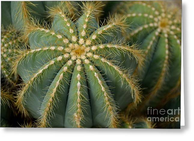 Parodia Magnifica Greeting Card