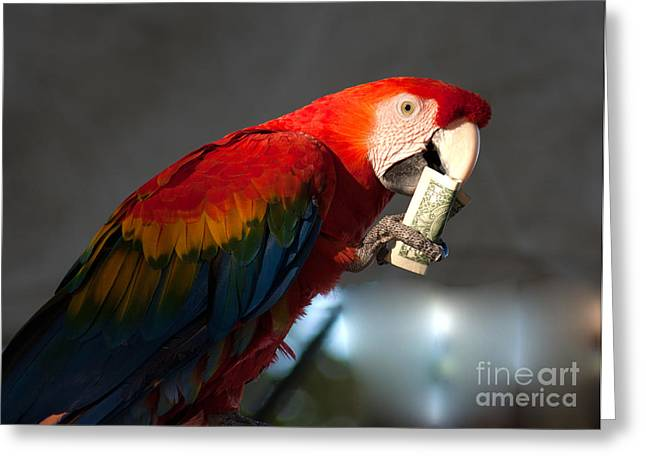Greeting Card featuring the photograph Parrot Eating 1 Dollar Bank Note by Gunter Nezhoda
