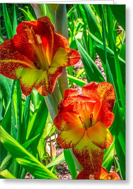 Greeting Card featuring the photograph Parrot Gladiolus by Rob Sellers
