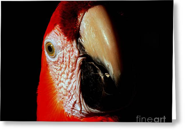 Greeting Card featuring the photograph Parrot by Gunter Nezhoda