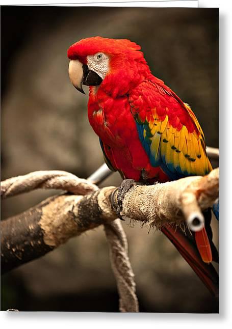 Parrot Greeting Card by Kerri Garrison