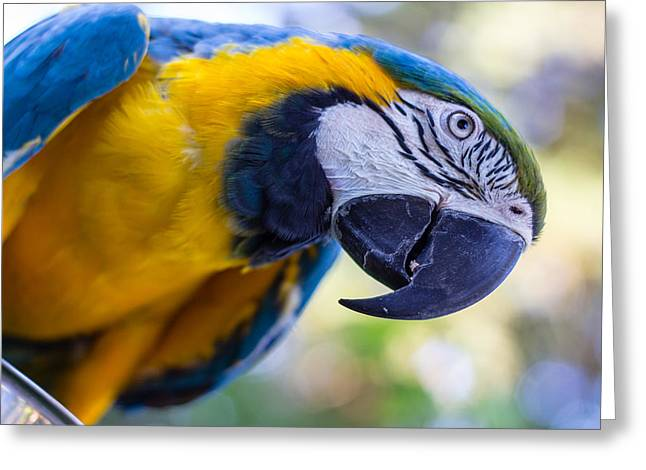 Greeting Card featuring the photograph Parrot by Randy Bayne