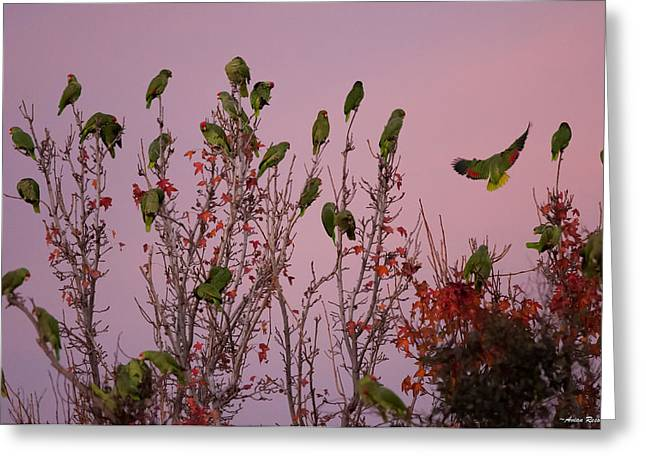 Parrots At Roost Greeting Card