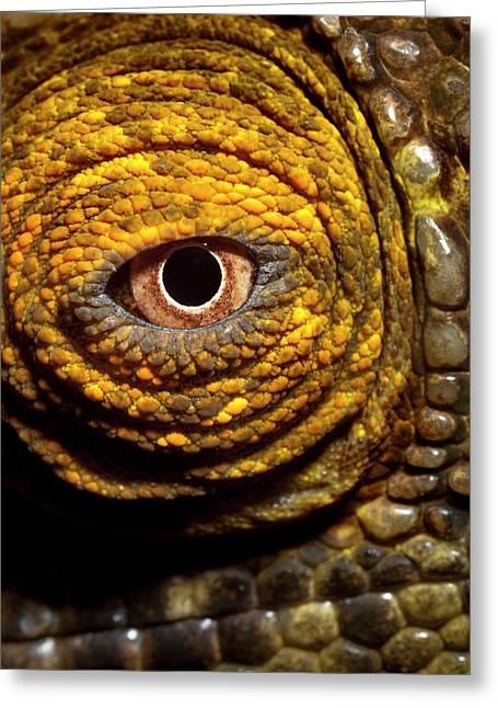 Parson's Chaemeleon Eye Greeting Card