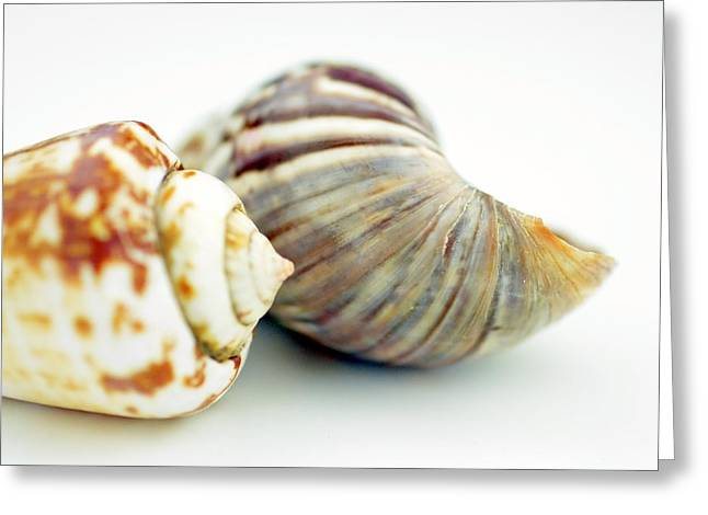 Part Of Sea Shell  Greeting Card by Tommytechno Sweden
