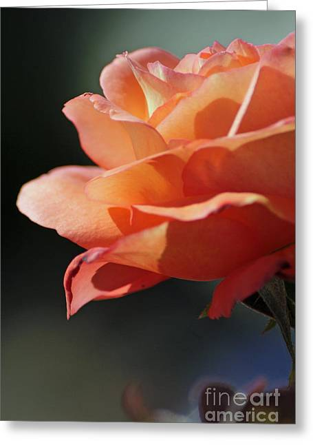Partial Rose Greeting Card by Chris Anderson