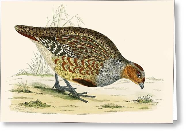 Partridge Greeting Card by Beverley R Morris