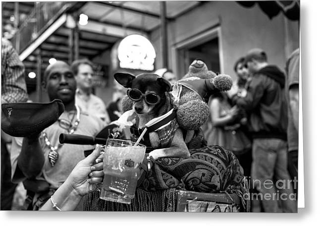 Party Dog On Bourbon Street Mono Greeting Card