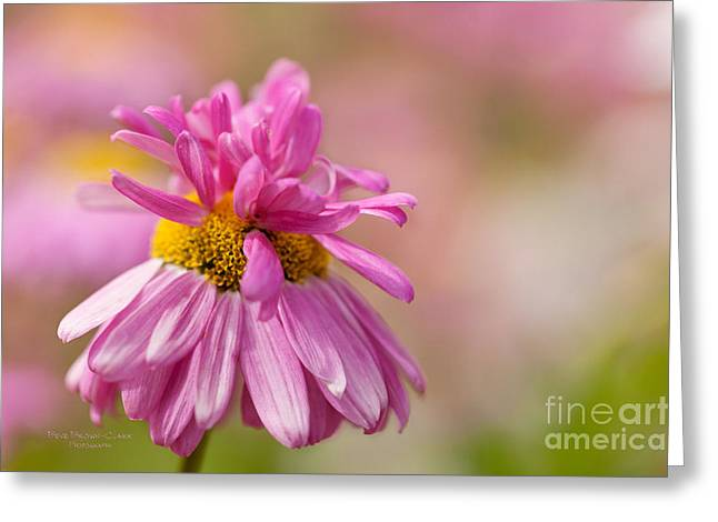 Party Girl Greeting Card by Beve Brown-Clark Photography