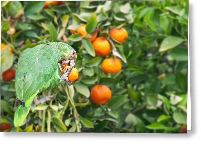 Pasadena Parrot Greeting Card