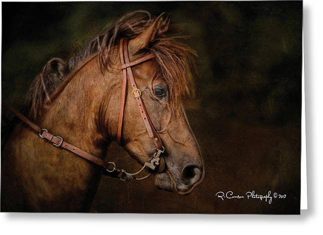 Paso Fino Portrait Greeting Card