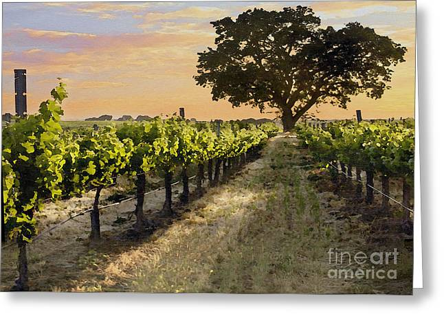Paso Vineyard  Greeting Card