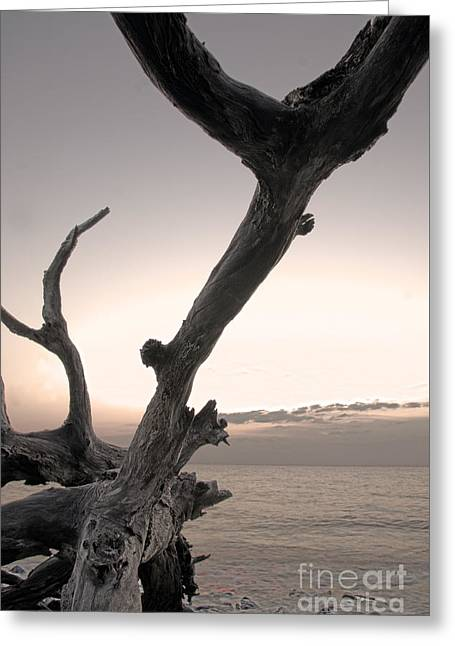 Greeting Card featuring the photograph Pass The Salt Please by Glenda Wright
