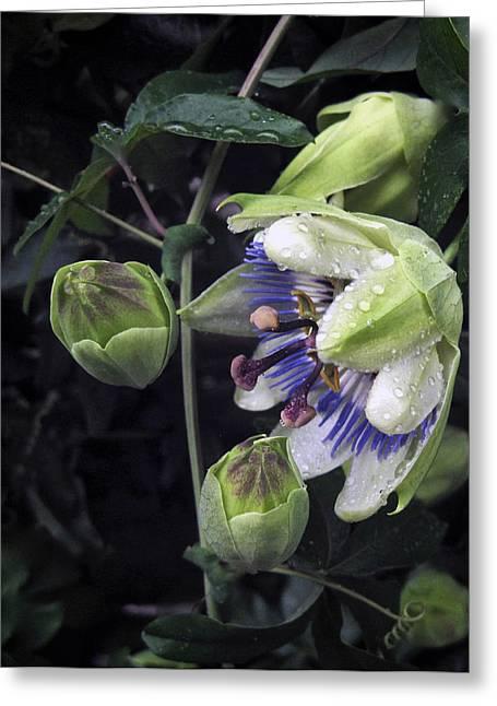 Passiflora Greeting Card