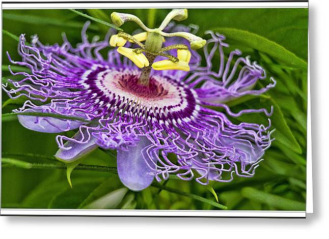 Passion Flower Easter Greeting Card