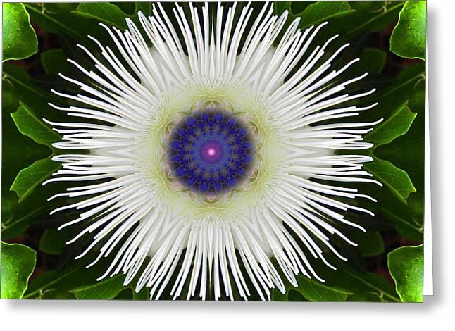 Passion Flower Portal Mandala Greeting Card
