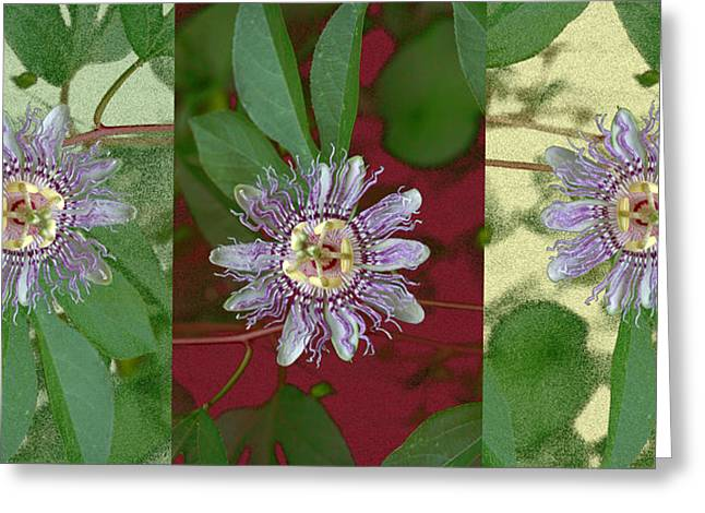 Passion Flower Triptych Greeting Card by Tom Wurl