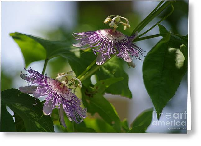Passion Flowers Greeting Card by Tannis  Baldwin