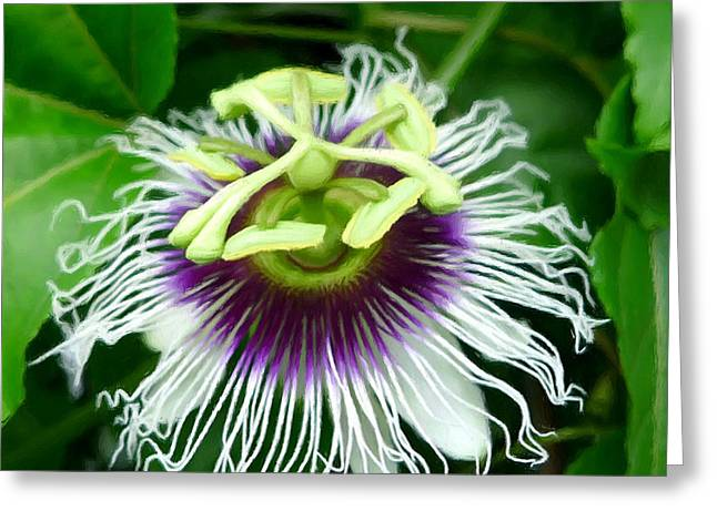 Passion Fruit Greeting Card by Lanjee Chee