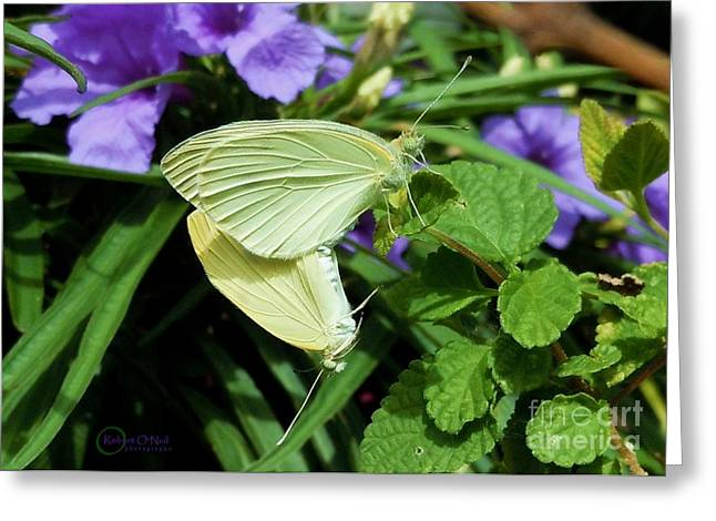Passion Of The Butterflies Greeting Card