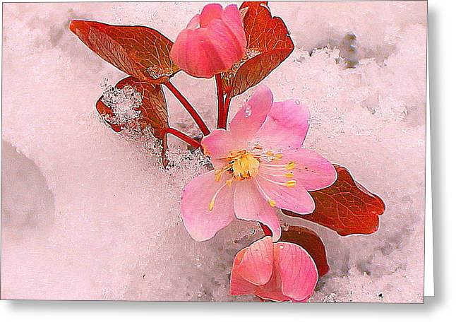 Greeting Card featuring the photograph Passionate Pink by Candice Trimble