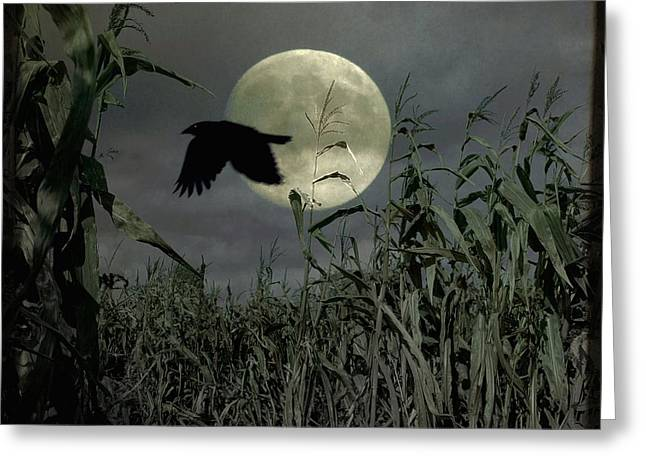 Fly Past The Full Moon Greeting Card by Gothicrow Images
