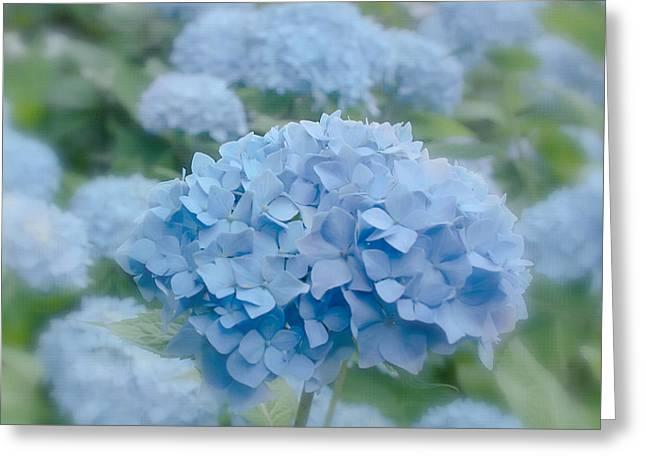 Pastel Blue Hydrangea Greeting Card by Kim Hojnacki
