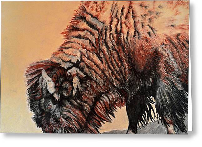 Pastel Buffalo Greeting Card by Ann Marie Chaffin