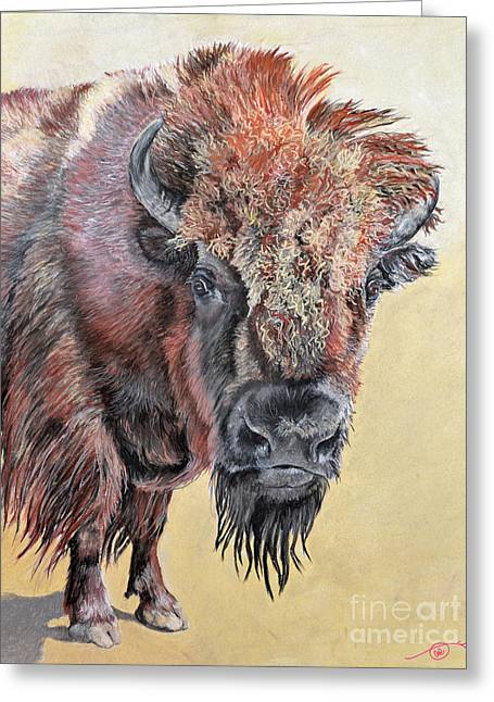 Pastel Buffalo Stare Greeting Card by Ann Marie Chaffin