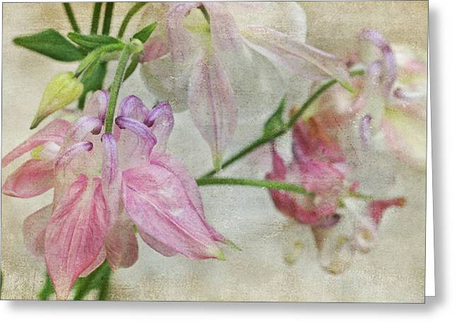 Greeting Card featuring the photograph Pastel Columbines by Peggy Collins