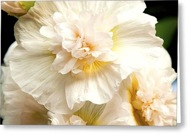 Pastel Delphinium Greeting Card