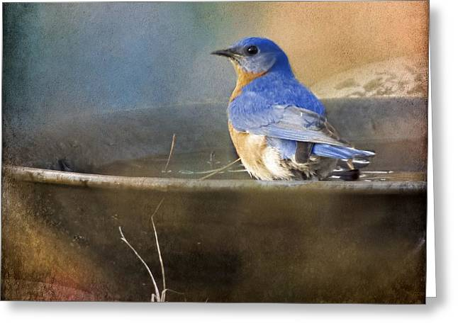 Pastel Eastern Bluebird Greeting Card