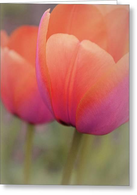 Pastel Love Greeting Card