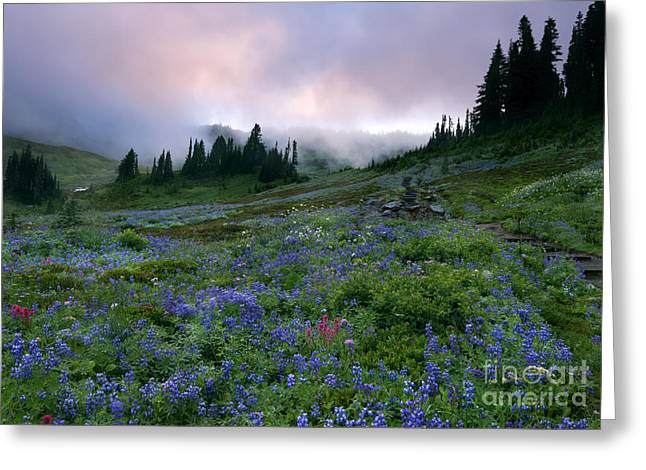 Pastel Mountain Dawn Greeting Card by Mike Dawson